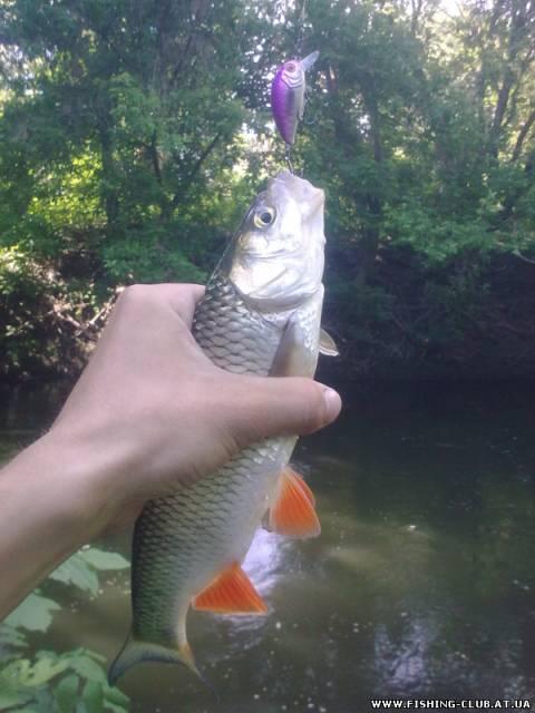http://fishing-club.at.ua/_fr/0/s0567733.jpg