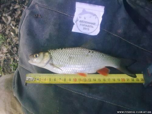 http://fishing-club.at.ua/_fr/0/s7294589.jpg