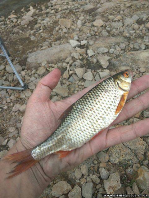 http://fishing-club.at.ua/_fr/21/s7016559.jpg